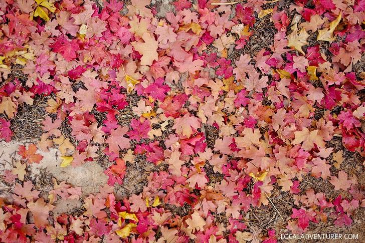 Fall in Utah.