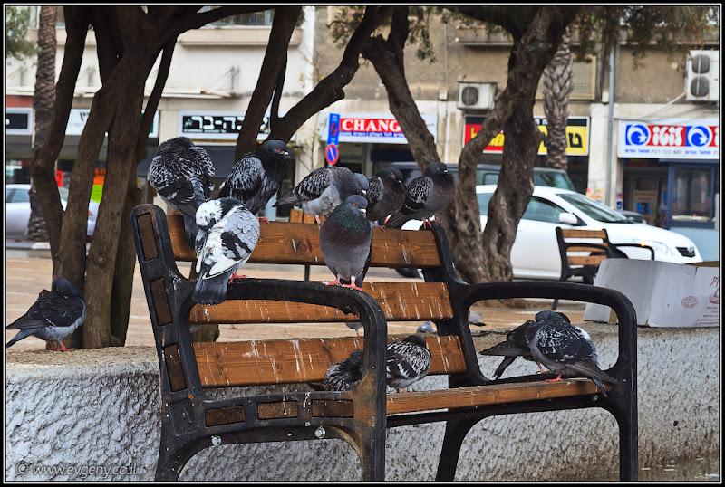 Оккупанты в центре Тель Авива