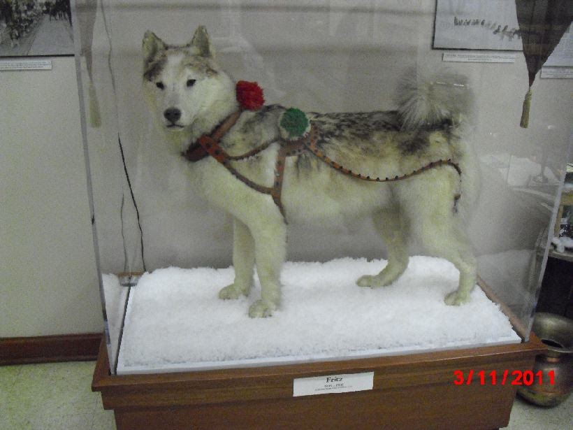 Jenny S Iditarod Adventure It S All About The Dogs