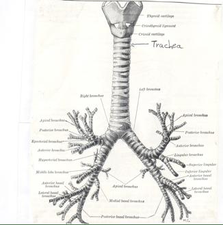 Physician's Notebooks: 6.1 Cardiovascular Respiratory