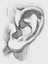 Draw ear step 4