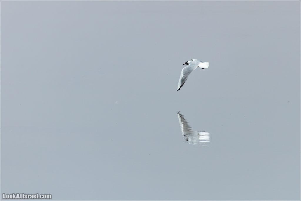 Птицы морей