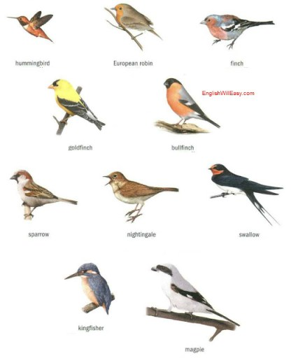 Ejemplos de aves