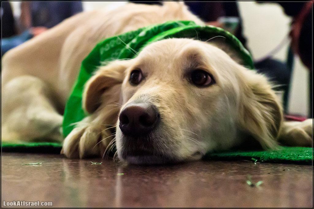 יום אימוץ כלבים וחתולים בדיזנגוף | Dogs & cats adoption events at Dizengoff