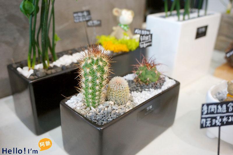 台南盆栽,日光夏蘭植物工房-7