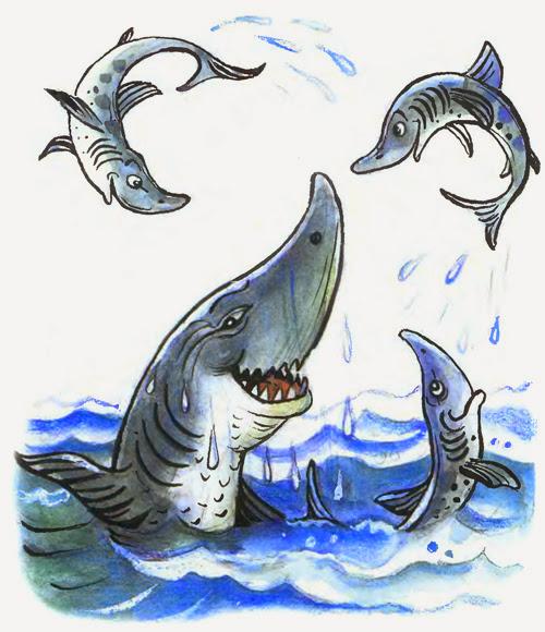 ойын арнасы акуласы