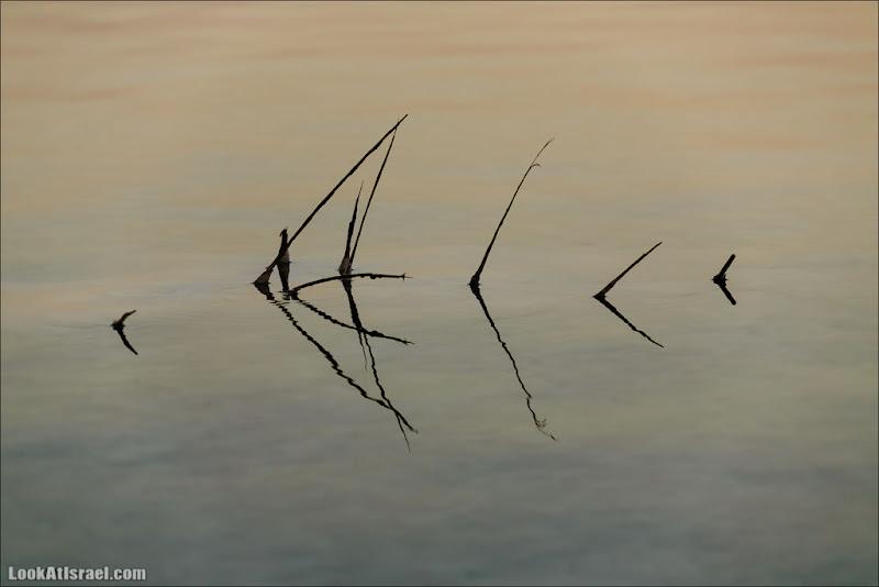 Рыбы Мертвого Моря