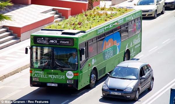 trồng cây trên nút xe bus