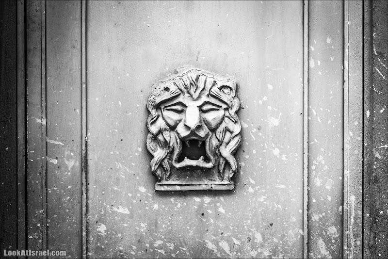 Тель Авивский лев