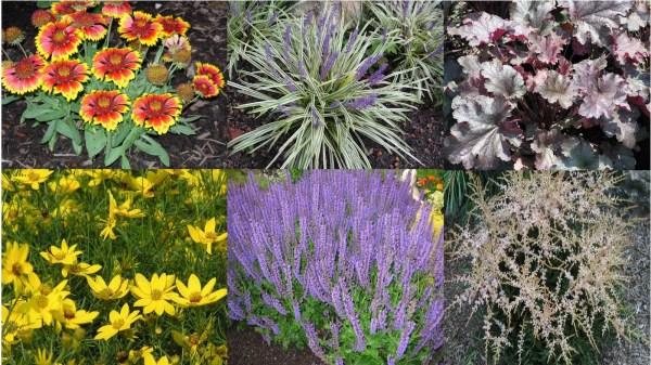 Zone 4 perennials vtwctr long blooming perennial flowers zone 4 mightylinksfo
