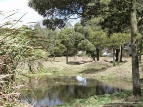Apertura de espejo de agua y podado de pasto