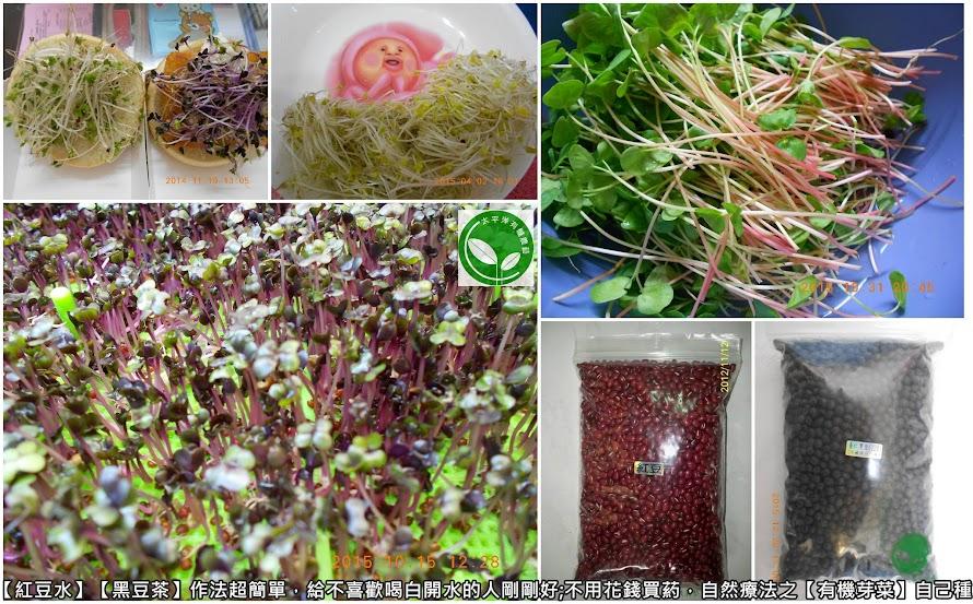 紅豆芽苗(食譜) @ 太平洋有機農藝~芽苗菜食譜分享 :: 痞客邦