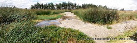 Humedal Tibanica sin espejo de agua