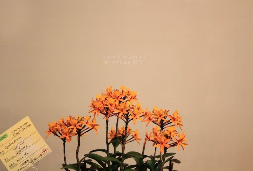 2015 台灣國際蘭花展地址-3