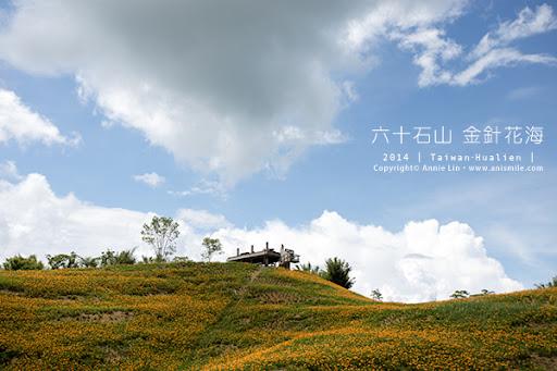 【走走花蓮】忘憂森林黃色花海 六十石山