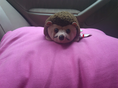 Hedgehog on a cushion