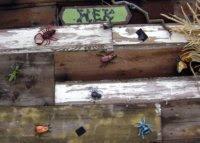 """Hex"" Bugs Invitation"