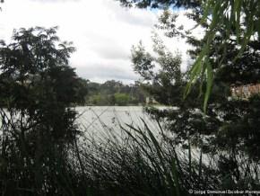 Humedal de Los Lagartos