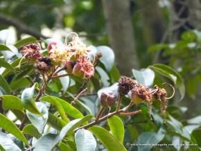 Flor del Guayacán, Humedal El Salitre