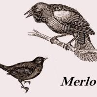 Il Merlo (Turdus merula) raccontato nel 1869