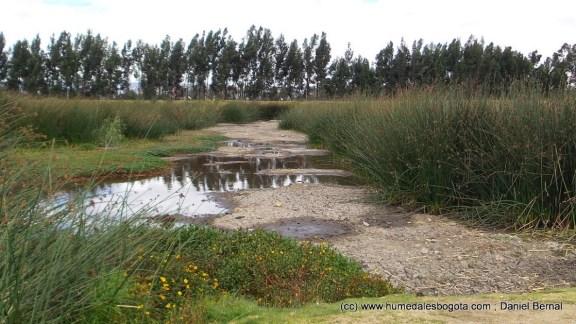 Lugar del antiguo espejo de agua principal del humedal Tibanica