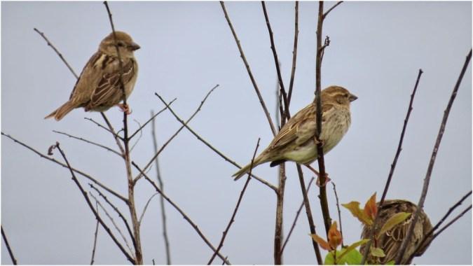 Unknown birds near Ahtopol