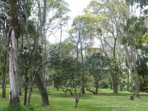 Bosque del Humedal Córdoba