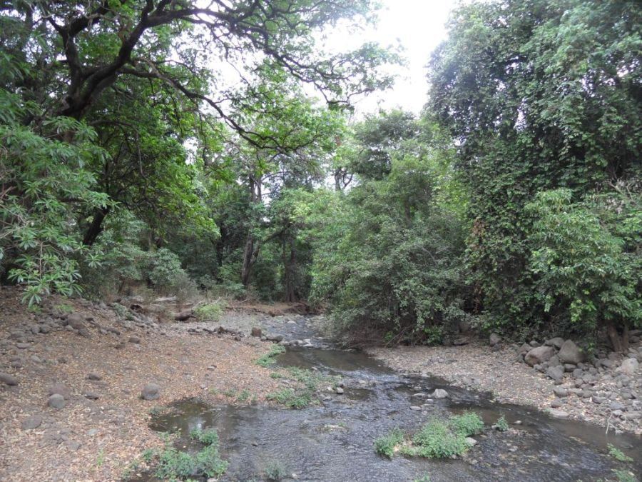 Manyara Milli Parkı yeşilliği