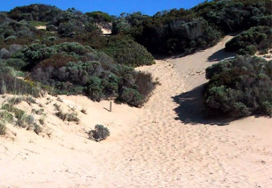 Cape to Cape Track - Climbing a Sand Dune