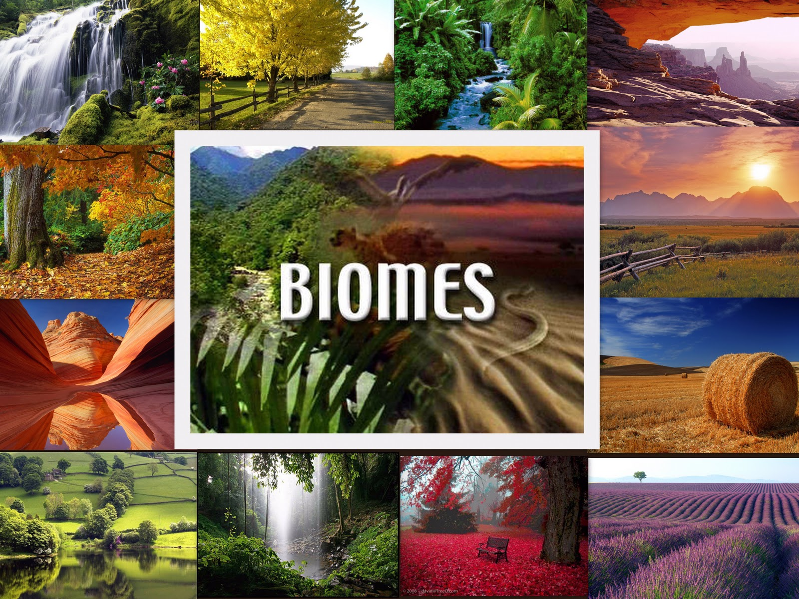 Maccused Biomes Collage
