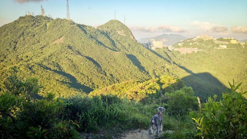 西高山點去 – Hong Kong West High Mountain Guide 路線 | :: 我們的部落格