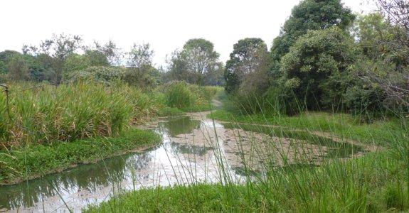 Humedal Santa María del Lago