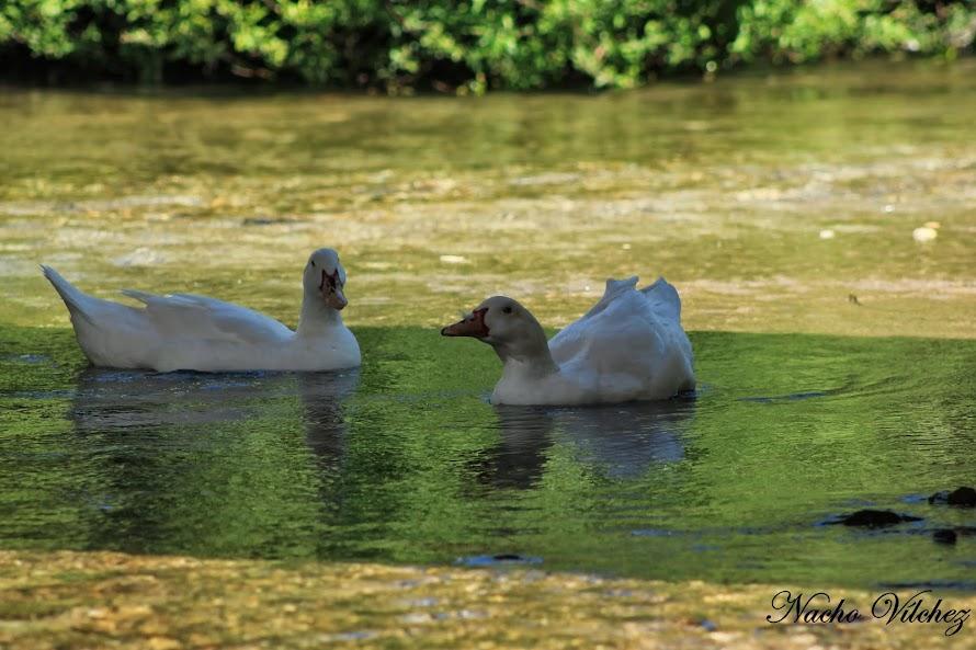 Río Frío y arroyo Salado 12.04.14 (3/6)