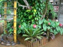 Sri Lanka Home Garden Plants
