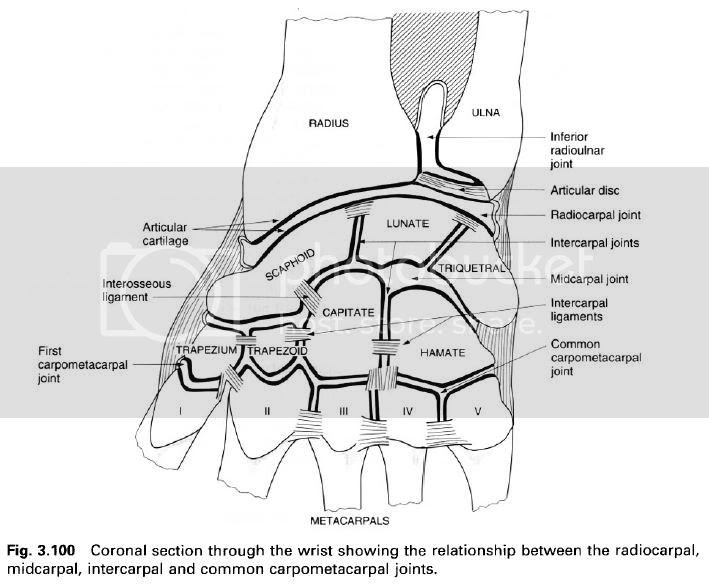 Complete Soccer Training: The intercarpal joints