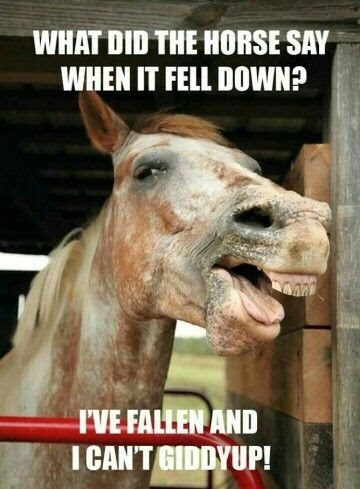 Horse Jokes For Adults : horse, jokes, adults, Funny, Horse, Jokes, Adults