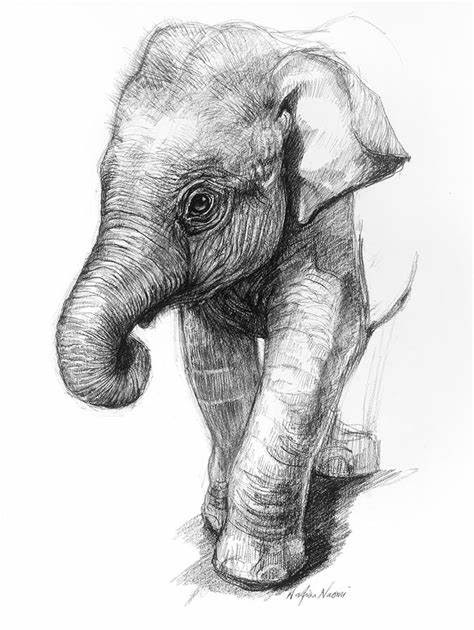 Realistic Elephant Face Drawing : realistic, elephant, drawing, Realistic, Elephant, Drawing, Ideas