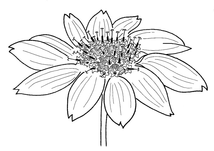 Flower Drawings with Color for Kids Tumblr in Black and