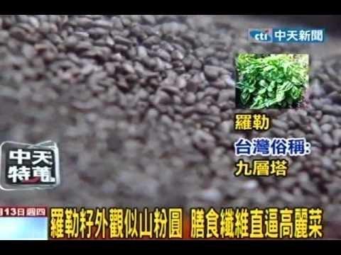 甜羅勒 ~ 陽臺農夫-如何在陽臺種植蔬菜