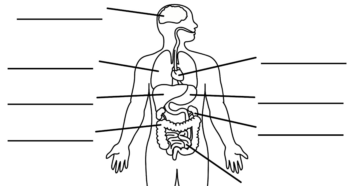 Organs In The Body Labeled