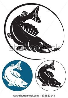 Ikan Gurame Vector : gurame, vector, Gambar, Vector, Aneka