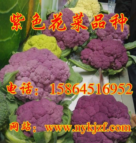 最高の引用: トップ100+紫色花椰菜種子
