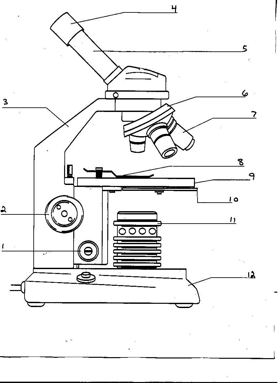 29 [PDF] BLANK MICROSCOPE WORKSHEET PRINTABLE ZIP DOCX