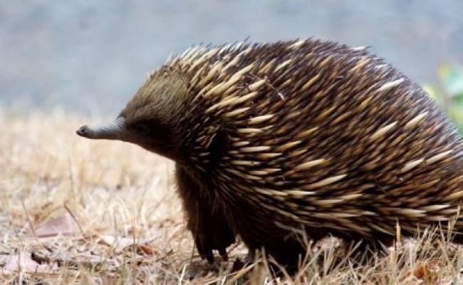 What Animal Is Knuckles Petfinder