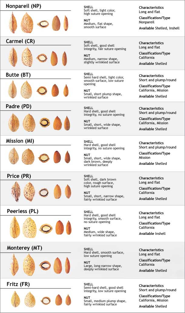 Chicos Size Chart : chicos, chart, Chicos, Chart, Gallery