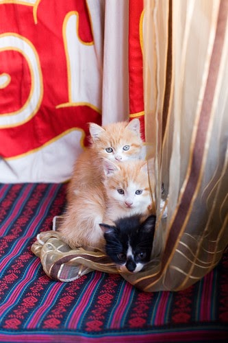 Gambar Kucing Comel Cute Anak Kucing Comel