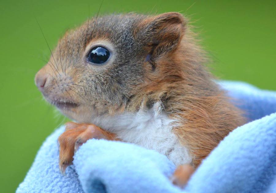 Eichhörnchen Bilder Kostenlos