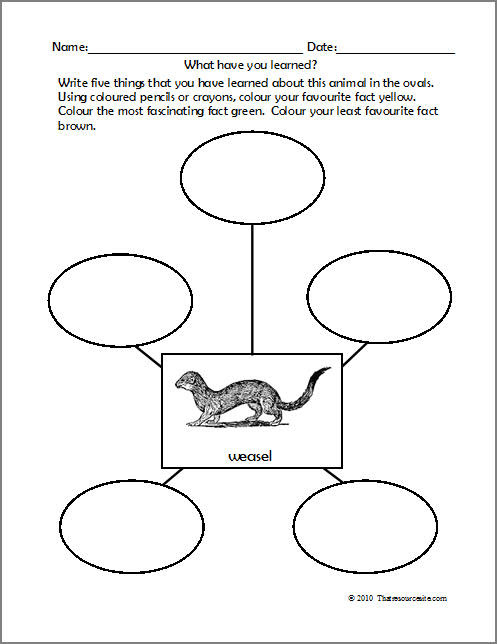 animal worksheet: NEW 346 ANIMAL NEEDS WORKSHEETS
