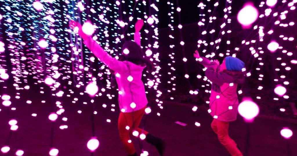 chicago botanic garden lightscape