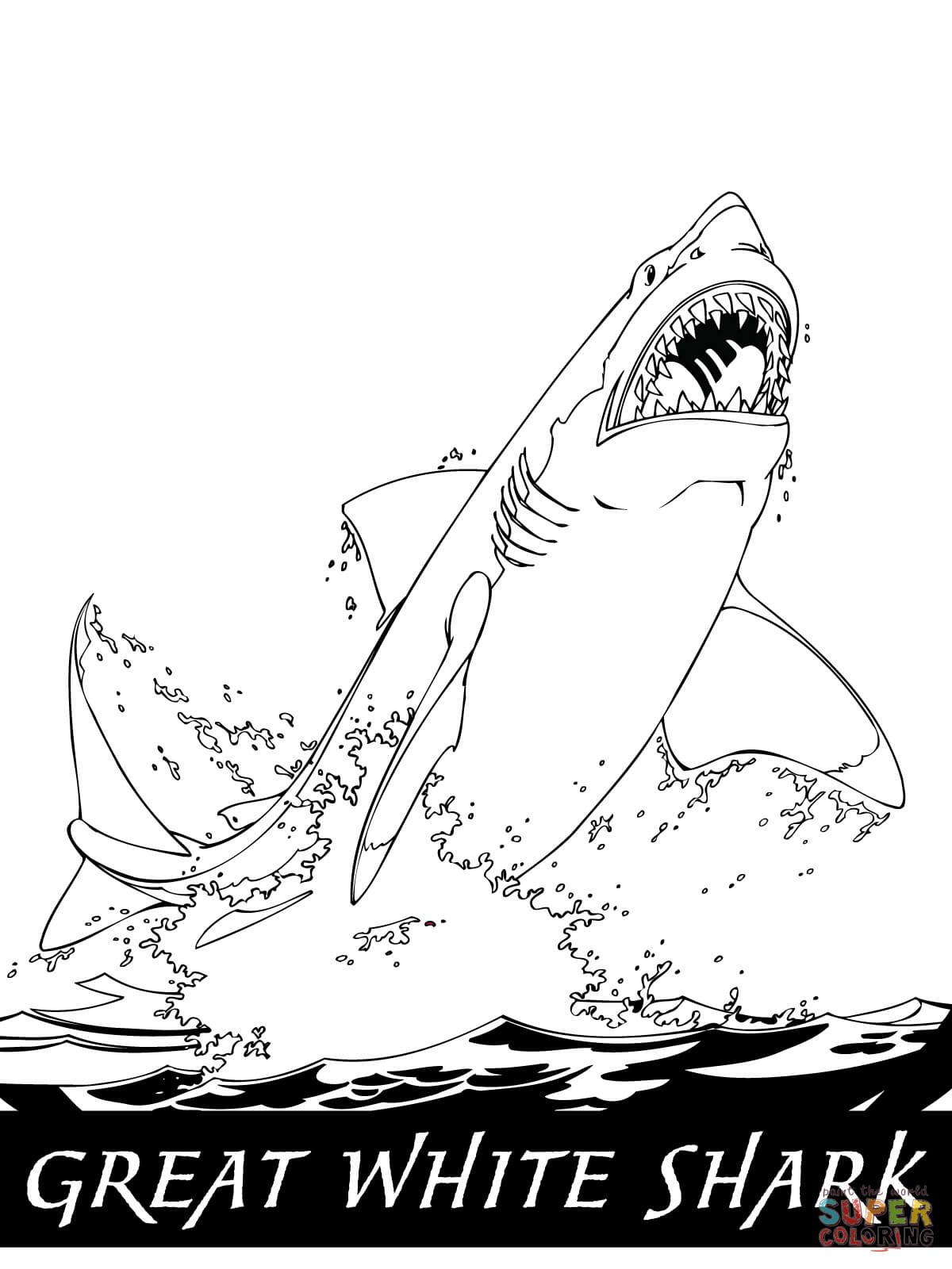 Schön Ausmalbilder Hai Kostenlos Top Kostenlos Färbung